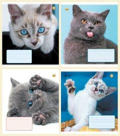 Набор тетрадей ученических Тетрада Кошки 4 дизайна в косую линию 12 листов 25 шт (13110)