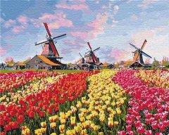 Картина по номерам Идейка Сельский пейзаж Красочные тюльпаны Голландии 40х50 см (КНО2224) (4820143948214)