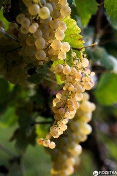 Вино Bugeuli Сапераві червоне сухе 0.75 л 12% (4860004130082)