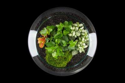 Декоративний флораріум круглої банку з живими рослинами MossGarden Ф8