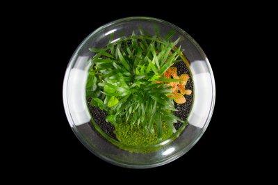 Декоративний флораріум в банку з живими рослинами MossGarden Ф3