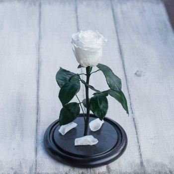 Стабилизированная роза в колбе Lerosh - Mini 27 см, Белый