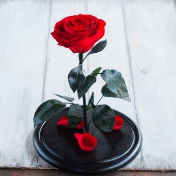 Стабилизированная роза в колбе Lerosh - Premium 33 см, Красный