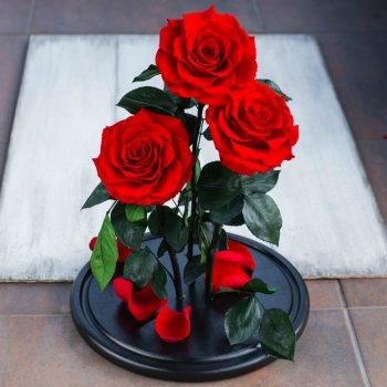 Стабилизированные три розы в колбе Lerosh - De Lux 43 см, Красный