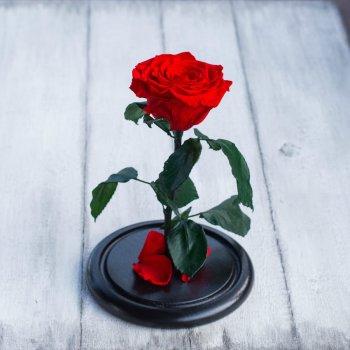 Стабилизированная роза в колбе Lerosh - Mini+ 27 см, Красный