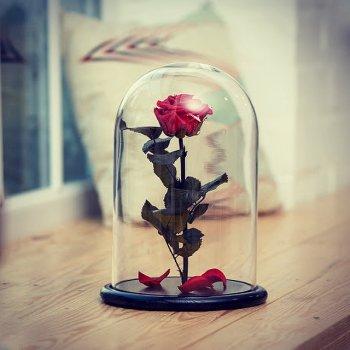 Роза в скляній колбі Червоний рубін.