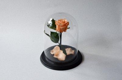 Стабилизированная роза в колбе Etoile Flora, Персиковый сад, 26 см (26R-0810)