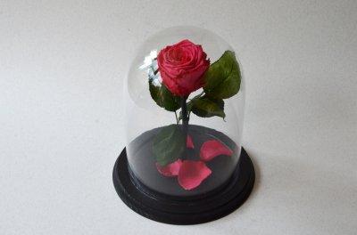 Стабилизированная роза в колбе Etoile Flora Вайра Мега Красный 26 см (26R-0818)