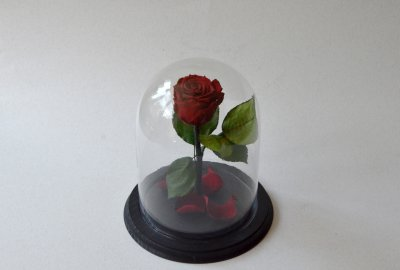 Стабилизированная роза в колбе Etoile Flora, Бордовый Кармен, 26 см (26R-0816)
