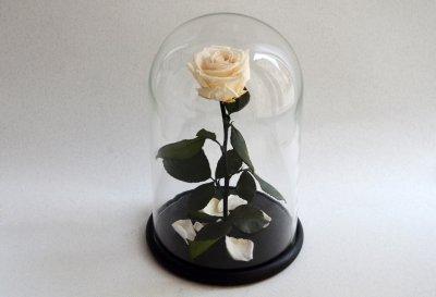 Стабилизированная роза в колбе Etoile Flora Коттоновый белый 33 см (33R-0808)
