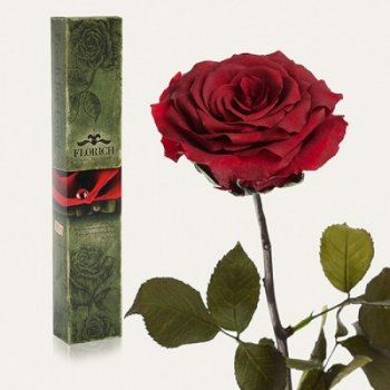 Долгосвежая троянда Червоний Гранат 7 карат (коротке стебло) FOR Арт.120262