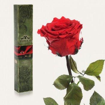 Долгосвежая троянда Червоний Рубін в подарунковій упаковці (не в'януть від 6 місяців до 5 років) на короткому стеблі FOR Арт.100964