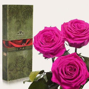 Долгосвежая троянда Малиновий Родоліт