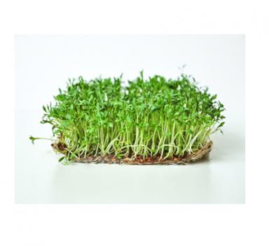 Мікрозелень Скайсмарт «Крес салат» 50 г