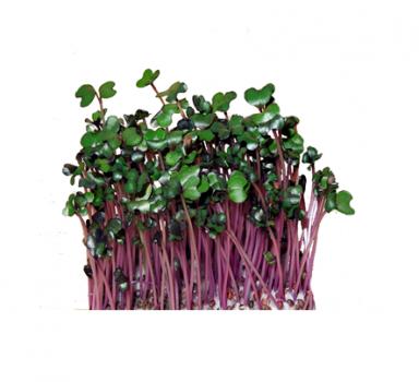 Мікрозелень Скайсмарт «Капуста червонокачанна» 50 г