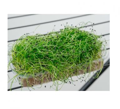 Мікрозелень Скайсмарт «Лук» 50 г